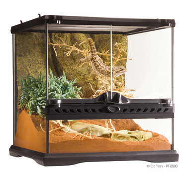 Pt2600 natural terrarium filled